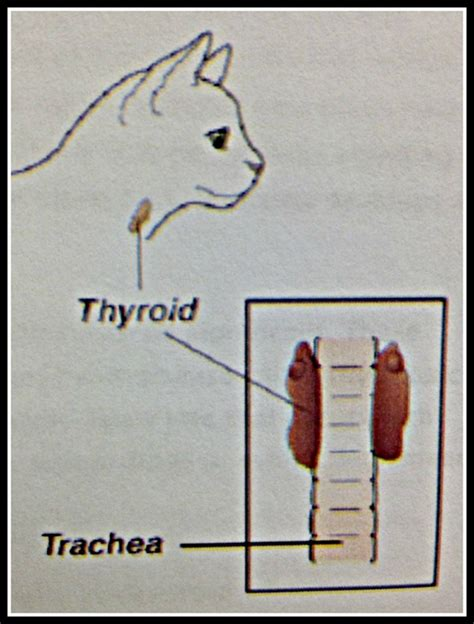 thyroid help in oklahoma picture 13