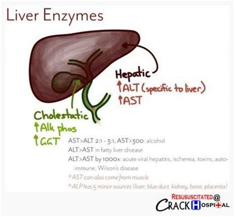 liver enzymes range of health picture 6