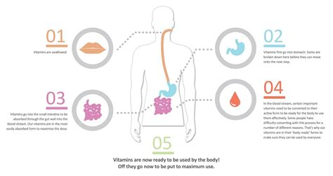 digestion of vitamins picture 15