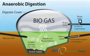 pictures of anaerobic digestion picture 6