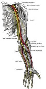lymph node arm tingle tingling asleep picture 10
