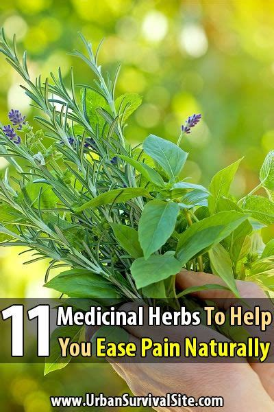 herbs as strong as morphine for pain picture 1