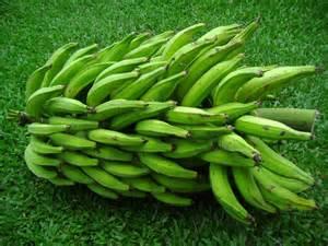 plantain picture 2