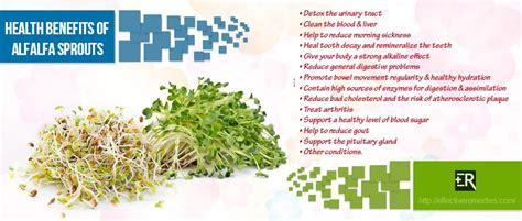 alfalfa leaf health benefit's picture 17