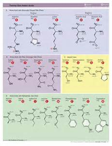 9 essential amino acids and dietary source chart picture 6