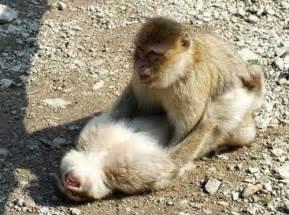 monkey sex online picture 6