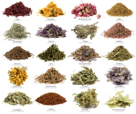 pagan herbs that stimulate collagen picture 15