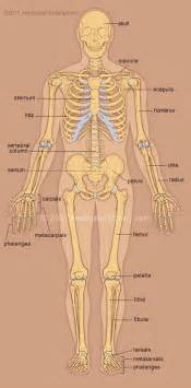 libido in men anatomy picture 7