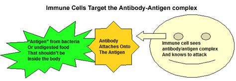 antibodies attacking thyroid picture 7