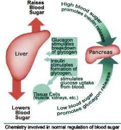 high levels of enzymes in pancreas and liver picture 7