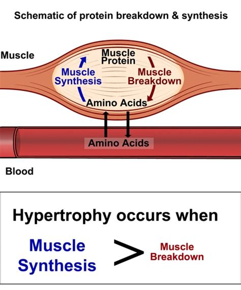 amino acid used to muscle workout picture 1