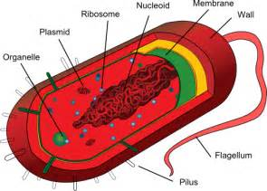 Bacterial cell image picture 5