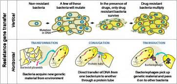bacterial resistance picture 7