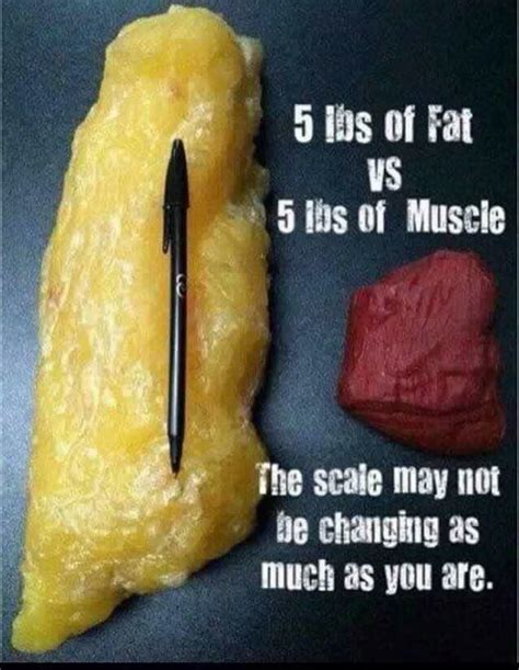 fat weight compared to muscle picture 2