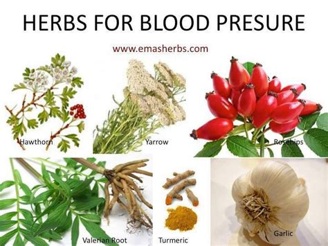 herb for blood flow picture 11