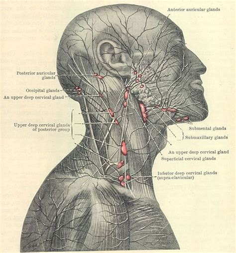 can hashimoto's thyroiditis cause swelling axillary lymph nodes picture 5