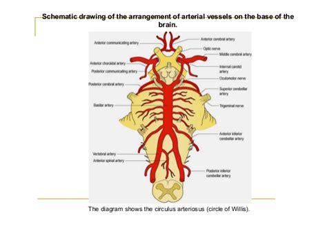 blood flow nerves picture 1