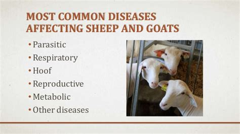 health problems of goats picture 5