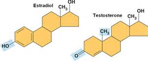 how are testosterone and estradiol difference picture 3