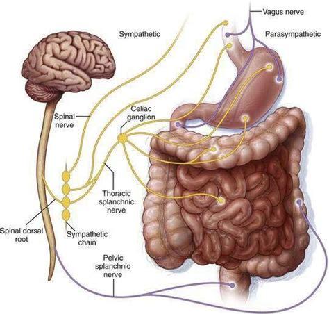 colon nerve problems picture 7