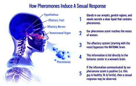 pheromones in sweat picture 14
