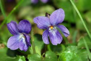 violet picture 6