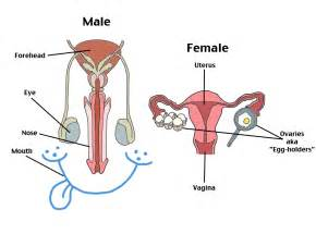 reproductive picture 15