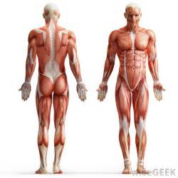 definition muscle strength picture 10