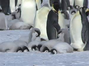 penguins sleep picture 2