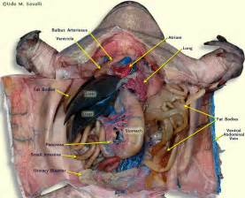 illustation for thyroid surgery picture 13