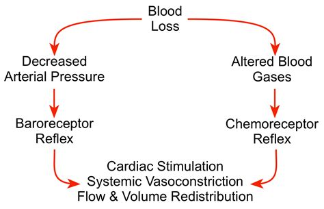 Arterial blood pressure picture 17