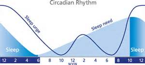 circadian sleep rhythm picture 18