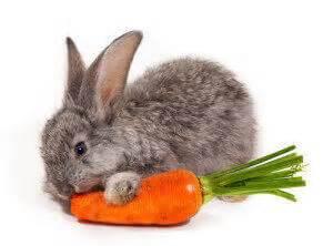 baby bunnies diet picture 2
