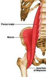 hip flexor muscle pull picture 2