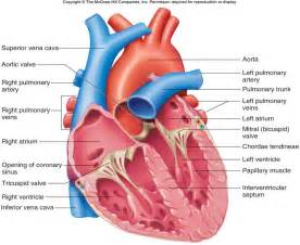 normal thyroid blood flow picture 11