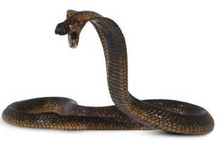 actual pictures of snakes h picture 10
