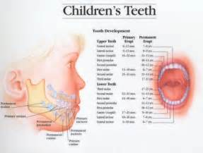 at what age should a child loose teeth picture 3