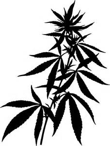 herbal marijuana picture 15