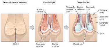 Hardening of the prostate what does it mean picture 7