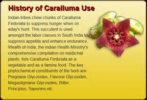 meaning of caralluma picture 2