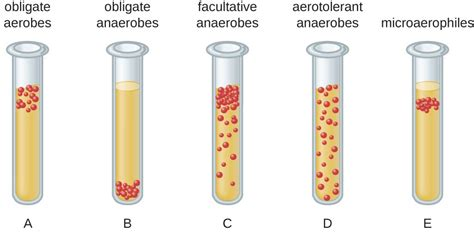 microbial growth picture 2