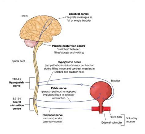 ways of bladder torture picture 10
