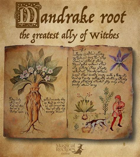 wiccan herbal recipes picture 2