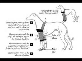 canine pain relief treatments picture 9
