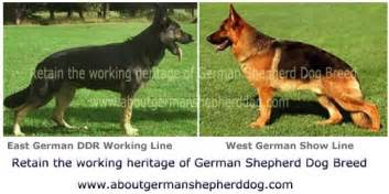 bloggers about bil german shepherds picture 3