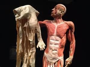 penile skin museum picture 3