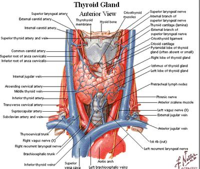 and thyroid picture 10
