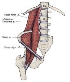 iliopsoas muscle picture 14