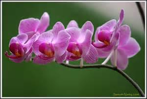 teas dissolve thyroid nodules picture 7