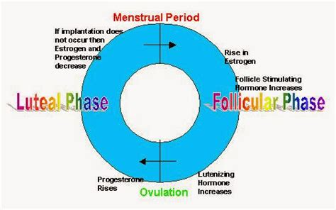 what way does hypothyroidism effect the menstral cycle picture 11